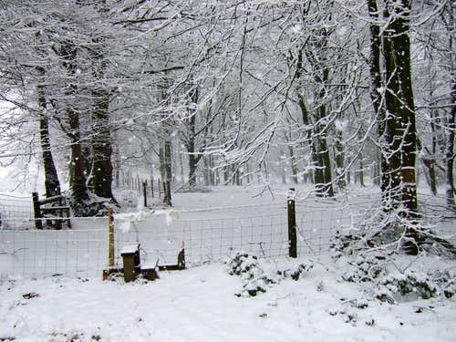 The stile at the beginning of Long Wood
