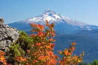 Mt Hood from Larch Mt