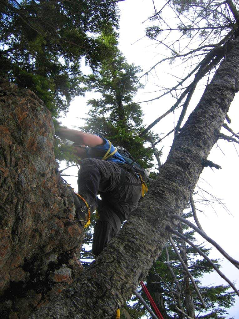Tree Rappin