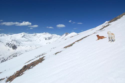 Dogs on route to North Star Mountain