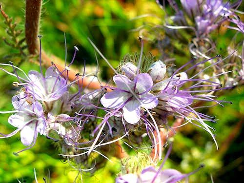 ???? strange plants
