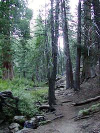 Vivian Creek