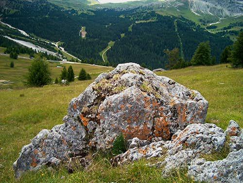 Lichen in the Dolomites