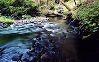 Oregon Coast Range Stream