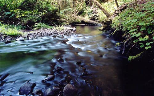 Oregon Coast Range Stream