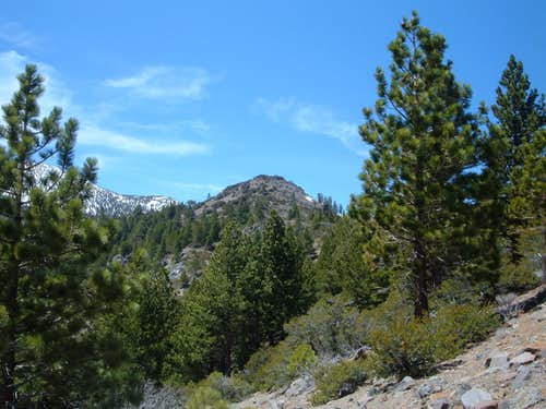 View of Point 8364 from the trail