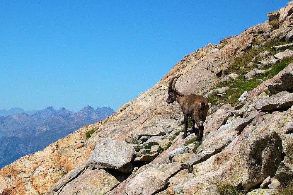 Stainbeck on Monte Matto