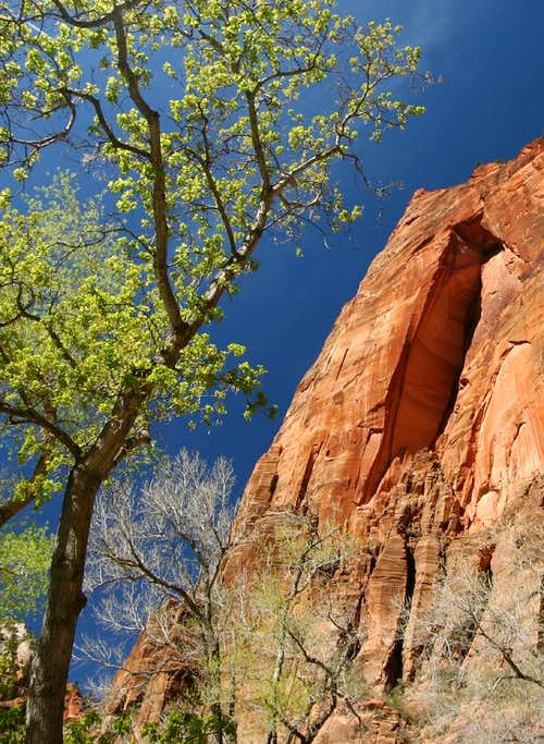 Springtime in Zion
