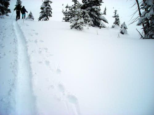 Judy breaking trail