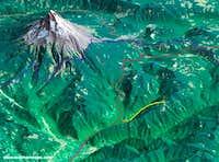 Devils Peak Map