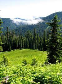 Sub-alpine forest view toward Three Sisters