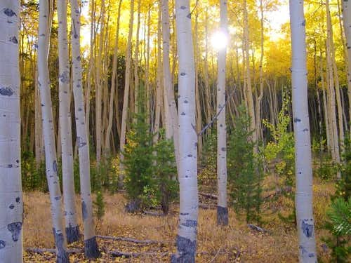Fall in Colorado-my favorite...