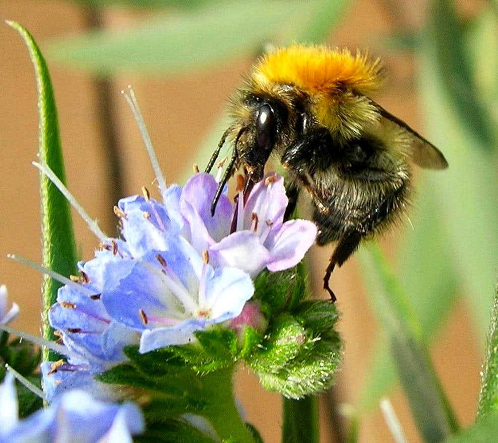 Bee gets honey