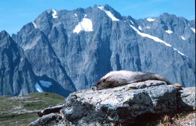 A very photogenic marmot on...