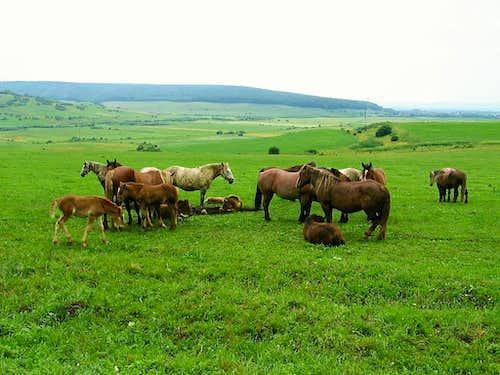 Horses close to Gorge of Torda