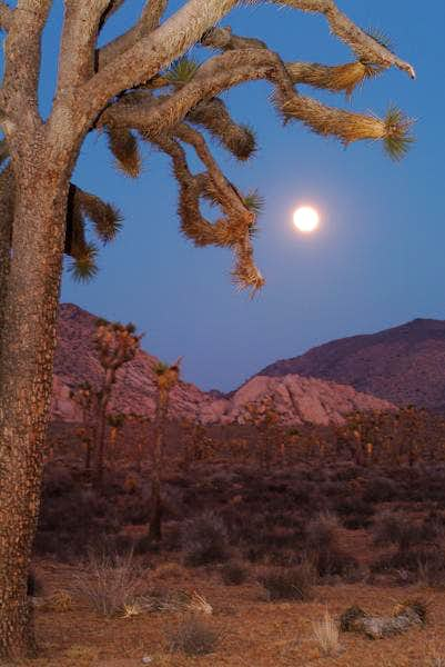 Moonrise at Joshua Tree