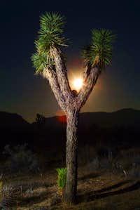 Moonrise at Joshua Tree