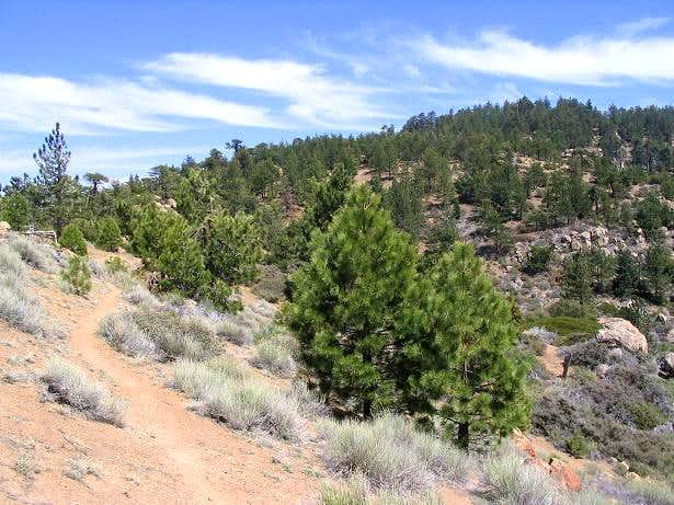 Reyes Peak