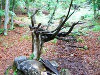 Höhlenstein