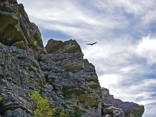 Turkey Vultures on Cliff Side