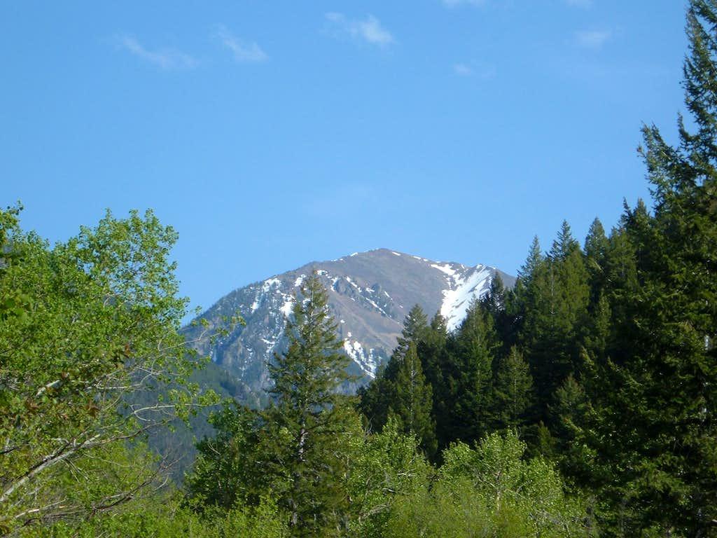 Peak 9,815 behind the trees
