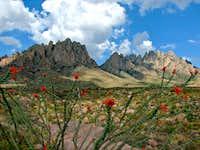 Ocotillo and Organ Mountains