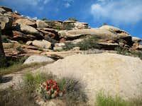 McDonald Creek Canyon flowers
