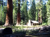 Yosemite's Mariposa Upper Grove
