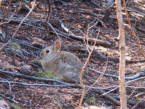 Hunkered Rabbit
