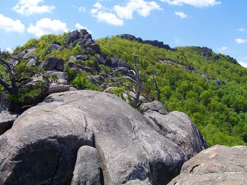 Bear, Scenery and Lots of Fun on Old Rag