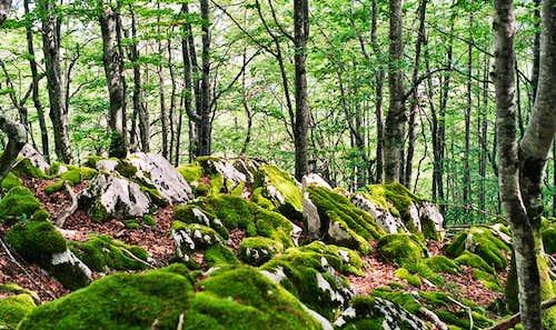 Beech Forest on the way to Aizkorri