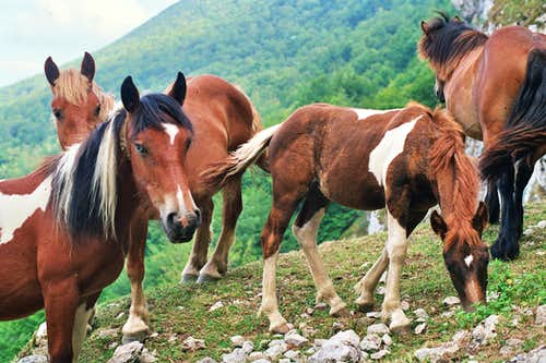 Horses at San Adrian Cave