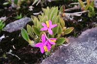 Flowers between the rocks