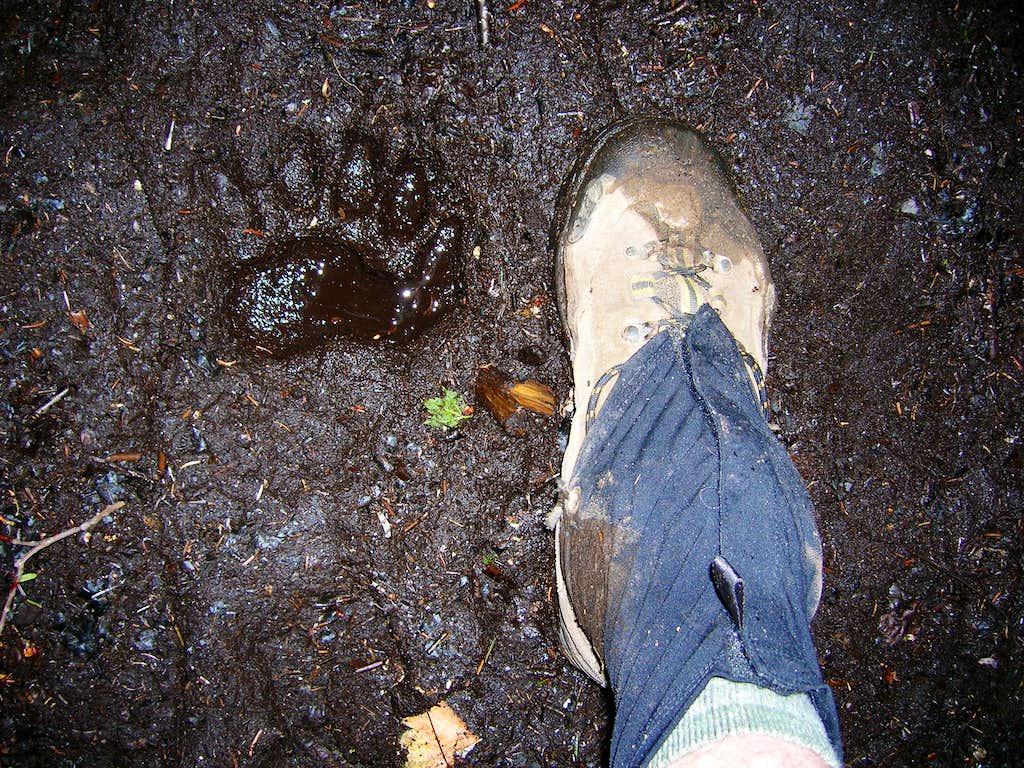 Adirondack Bear