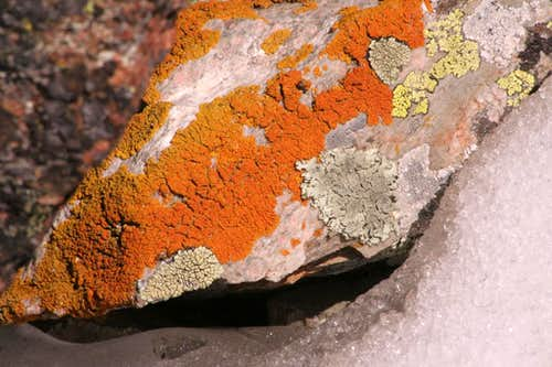 Colorful lichen display