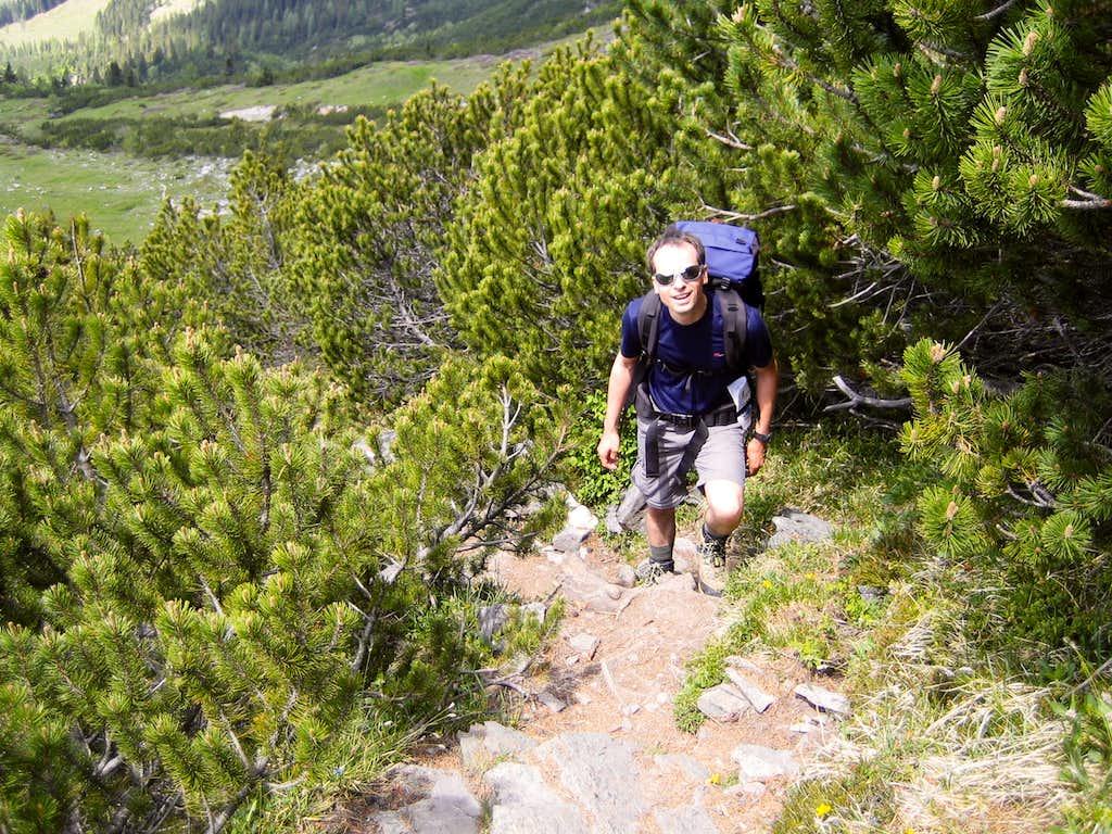 Steep ascent through mountain pines