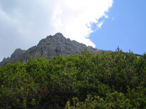 Taghaube from the mountain pines