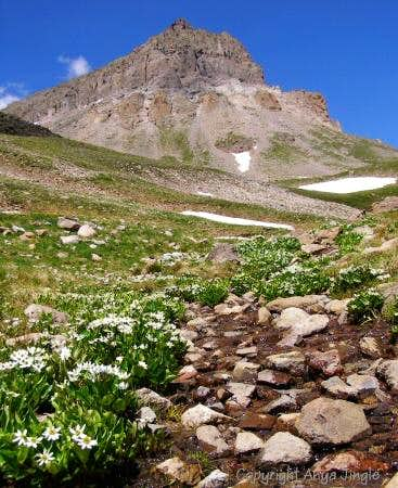 View of Uncompahgre Peak from trail