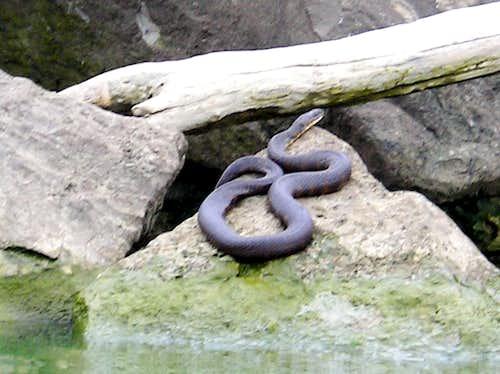 Erie Water Snake