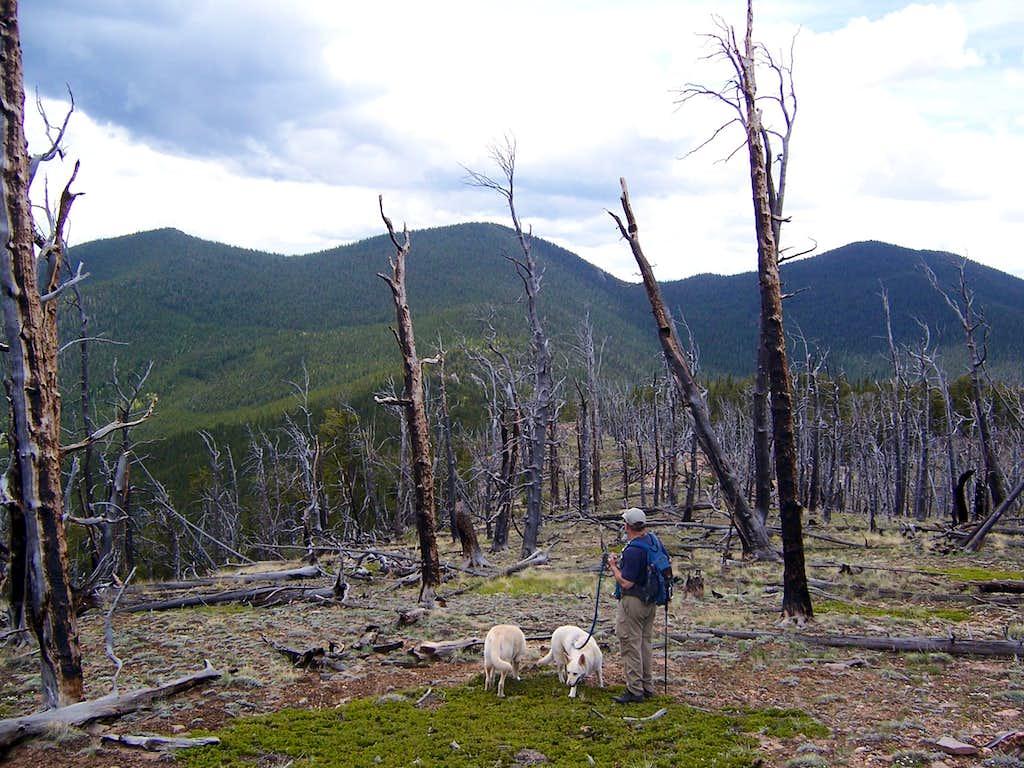 Little Puma Flanked by Farnum (L) and Puma Peak (R)