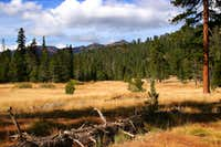 Deadfall Meadows