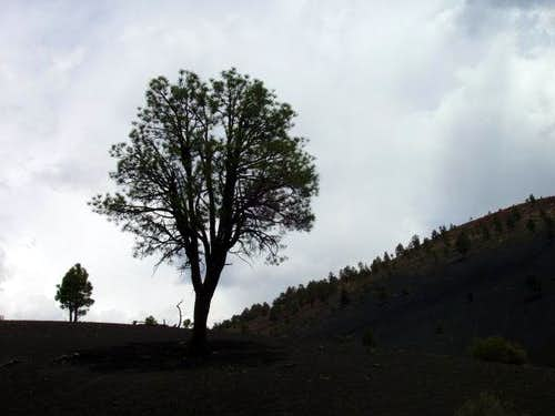 Tree Silhouette at Sunset Crater