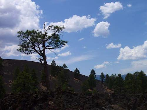 Sunset Crater Landscape