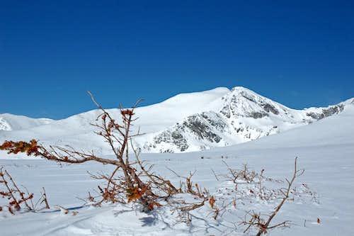 Mt Bancroft