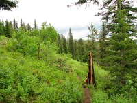 Trail on Mount Kit Carson