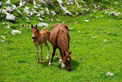 Wild horses in Valle Venacquaro