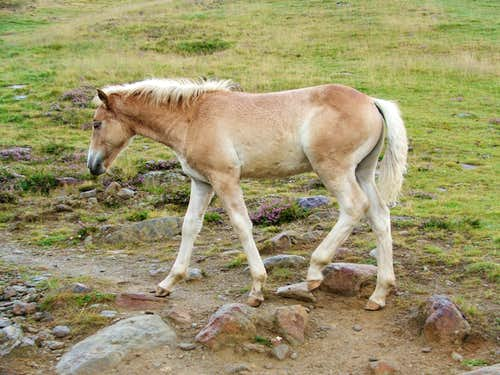 Horse near Vent