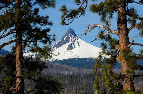 Mt. Washington from near Santiam Pass