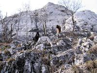 Belgian sheperds as mountain goats