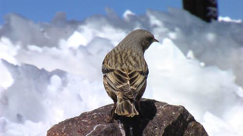 Bird on the summit